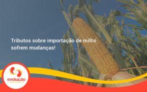 Tributos Sobre Importação De Milho Sofrem Mudanças! Evolucao - Evolução Gestão Empresarial